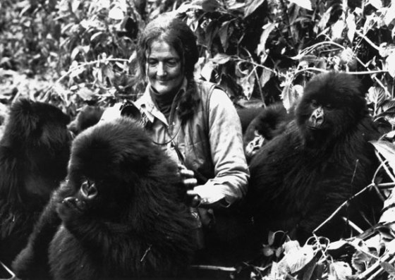 dian-fossey-mountain-gorillas